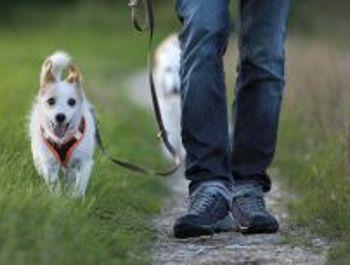 BFH: Auf den Hund gekommen